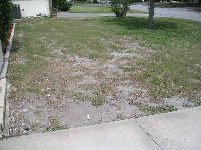 Dead grass before sod replacement