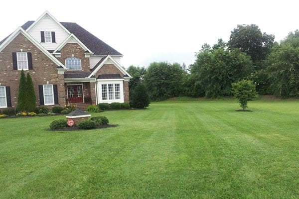A good way to manage thatch is to prevent build-up to begin with by choosing the right grass seed, checking your soil pH levels and performing aeration, says Stumer. (Photo courtesy of Angie's List member Bev S. of Holly Springs, N.C.)