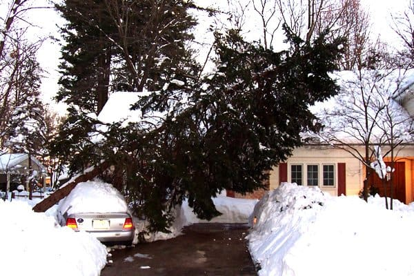 Use Angie's List to find a reliable tree service in your area. (Photo courtesy of Katrina Sanchez)