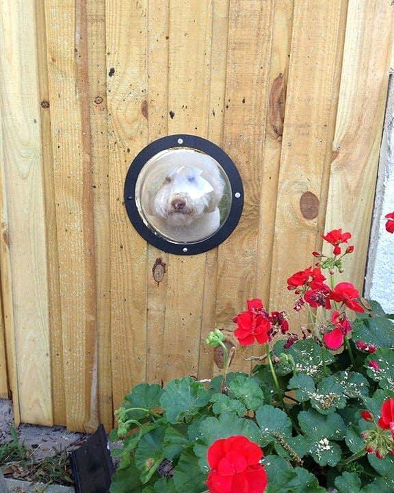 dog portal in fence