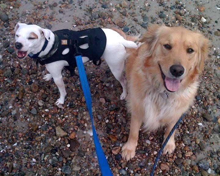 two dogs on a walk