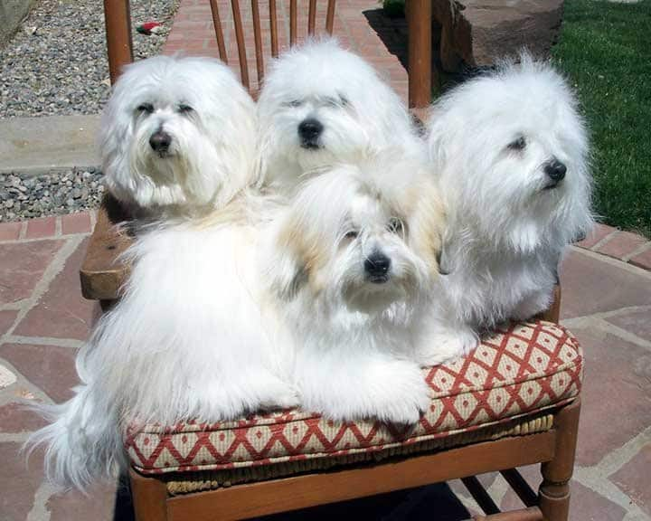 four dogs sitting on a chair
