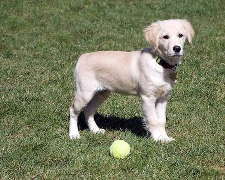 dog training for puppy