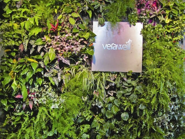 Living walls resemble a garden, in that the initial plant size and spacing is not necessarily indicative of how the wall will look a few months after the installation.