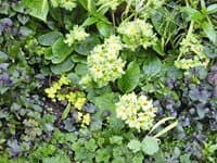 Photo courtesy of Lorene Edwards Forkner This ground cover tapestry, which includes  a spring primrose, insulates soil from temperature fluctuations and reduces evaporation.