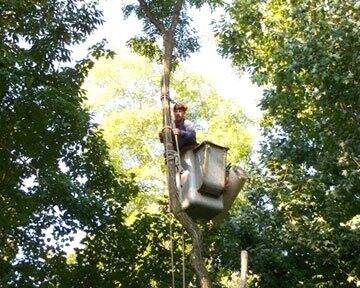 tree service contractor pruning trees