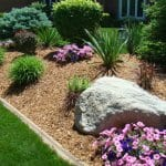 front yard landscape with gold mulch