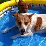 dogs splashing in swimming pool