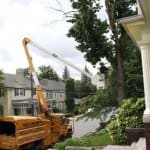 expert removing tree with bucket truck