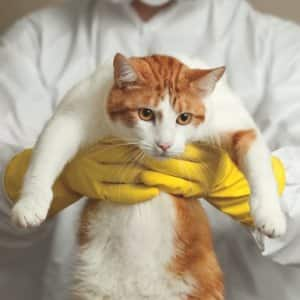 cat being held by someone in a hazmat uniform