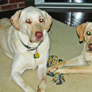 Two dogs sit together with a toy rope. (Photo by Photo courtesy of Wendy Adams)