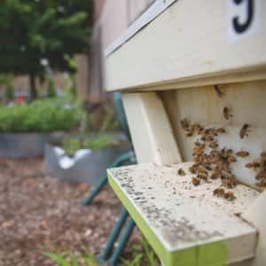 Expect to see growth in your garden if you incorporate a honeybee hive. (Photo by Eldon Lindsay)