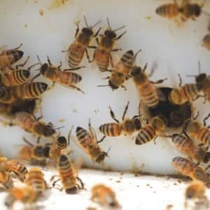 A local beekeeping class will teach you what you need to know about maintaining a bee hive. (Photo by Eldon Lindsay)