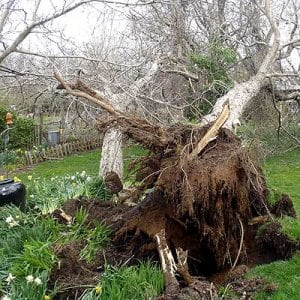 Homeowners often suffer from tree damage after major storms. Though not all instances can be prevented, diseased and dying limbs should be removed prior to the storms arrival. (Photo courtesy of Angie's List members James and Jody G.)