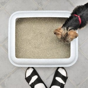 dog by litter box
