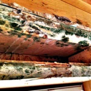 Many homes in humid climates are susceptible to mold growth on furniture, clothing and even structural walls if there is inadequate ventilation, says Belk. (Photo courtesy of Gold Coast Flood Restorations)
