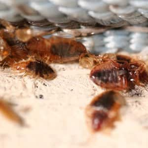 How Much Does Terminix Bed Bug Removal Cost