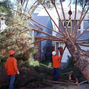 A professional tree service can safely remove trees and stumps from home landscapes. (Photo courtesy of Angie's List member Amy S.)