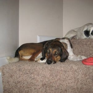 dogs lying on stairs