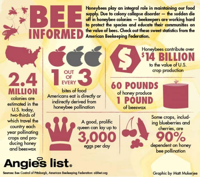 Infographic about the value of honey bees to the U.S. economy