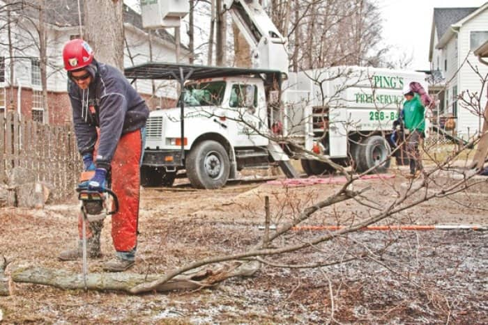 Ted Huntly of Ping's Tree Service uses a chain saw to cut a large branch. (Photo by Brandon Smith)