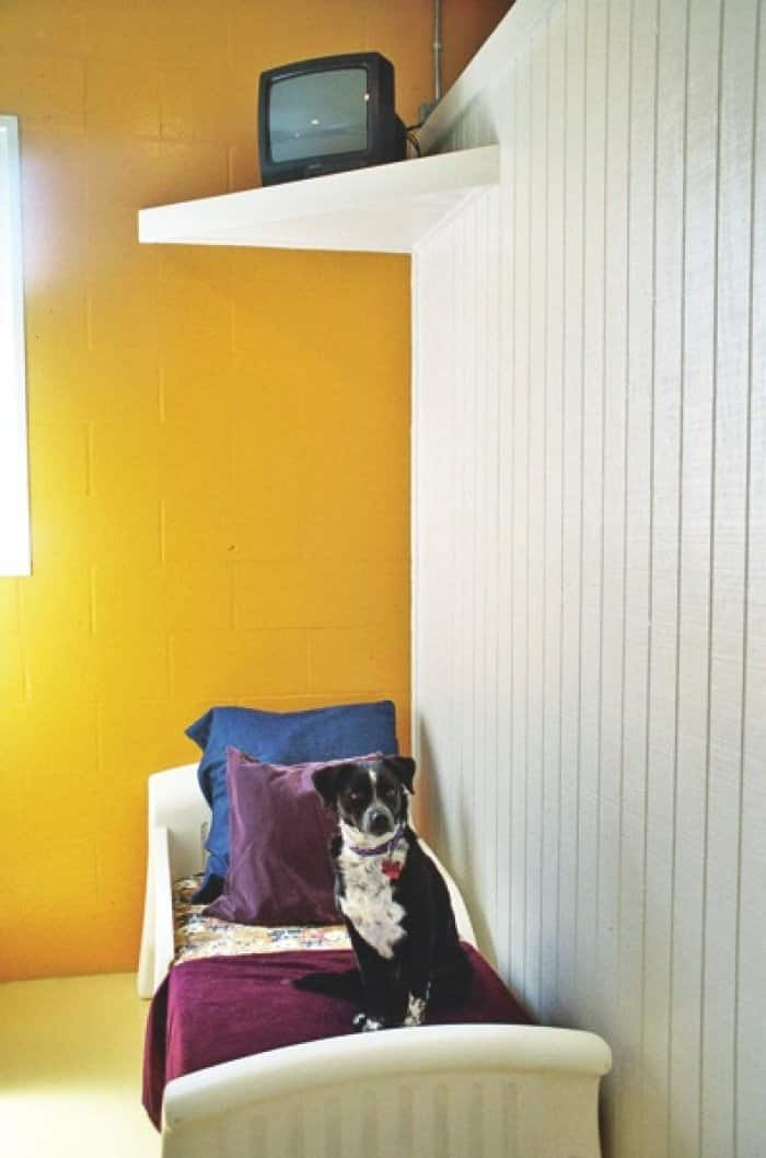 dog in a boarding suite