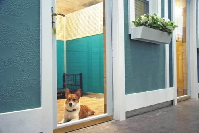 corgi at a pet hotel