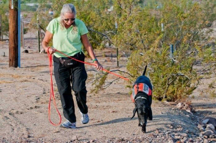 Cooke retraces an area Riley covered with Lucas, to see if he picks up on the same trail. (Photo by David Basaldua)