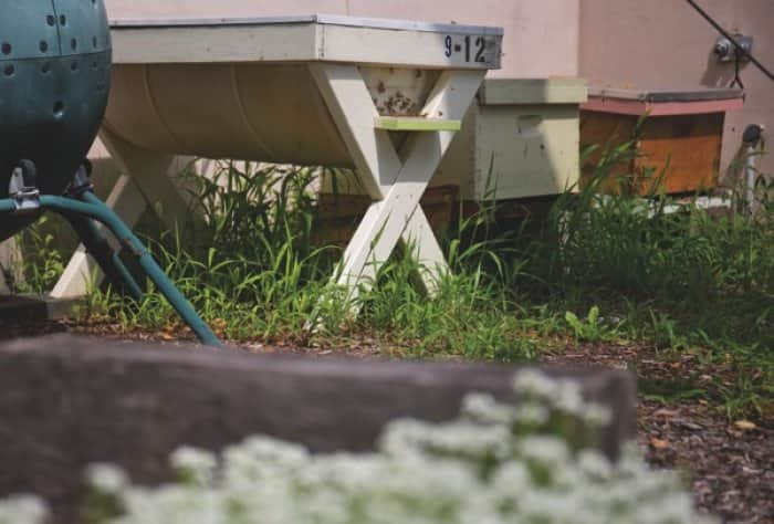 R Bistro, a restauarant in Indianapolis that focuses on using fresh, local ingredients has hives in their slow food garden. (Photo by Eldon Lindsay)