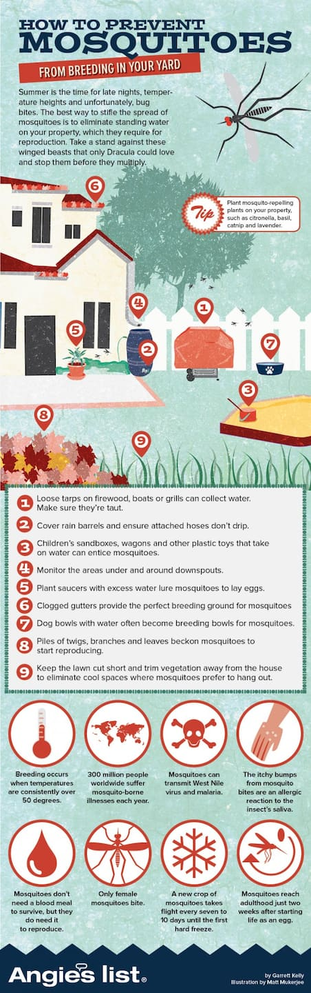 mosquito breeding grounds graphic