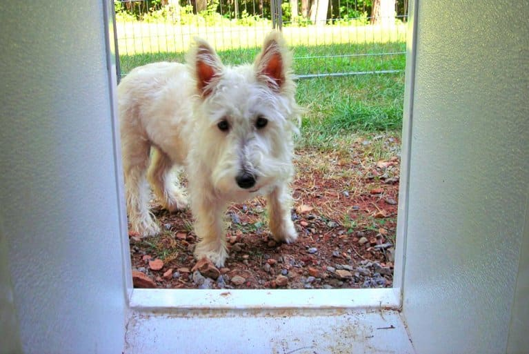 does a pet door pose a security risk