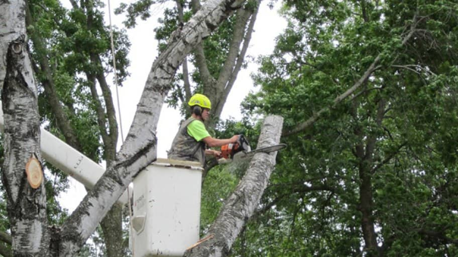 how to cut down a large tree in your yard