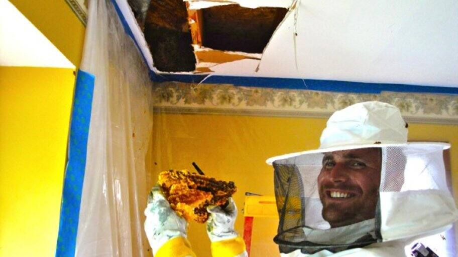 Beekeepers Buzz About Live Bee Removal Angie S List