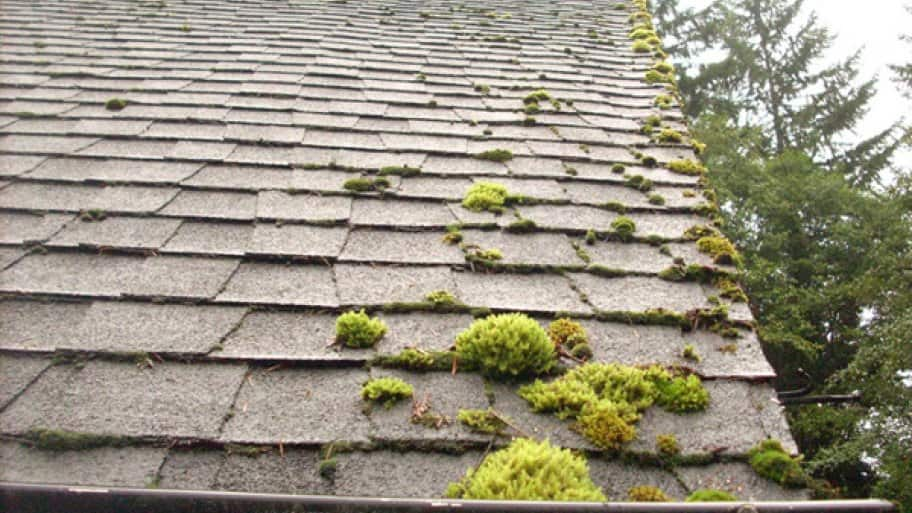 A thorough roof cleaning will take off all black stains and moss, bringing your roof back up to a like-new appearance, says Ashworth. (Photo courtesy of Angie's List member Teresa J. of Longview, Washington)