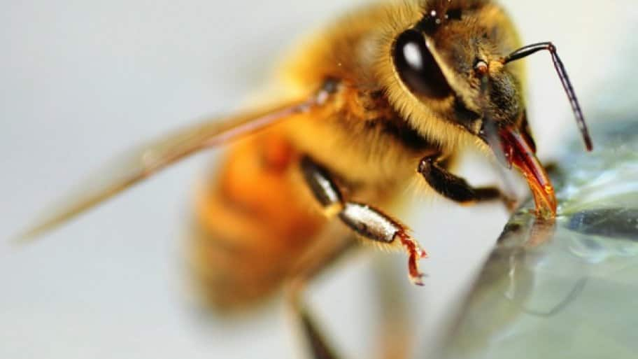 Whats the buzz when it comes to bee removal angies list honeybee removal solutioingenieria Images