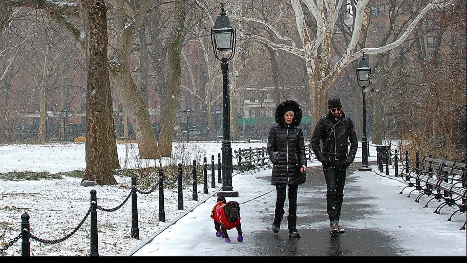 two people walking a dog in snow