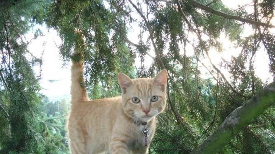 Kraus says every cat rescue is different and usually depends on the cat's demeanor. (Photo courtesy of Dan Kraus)