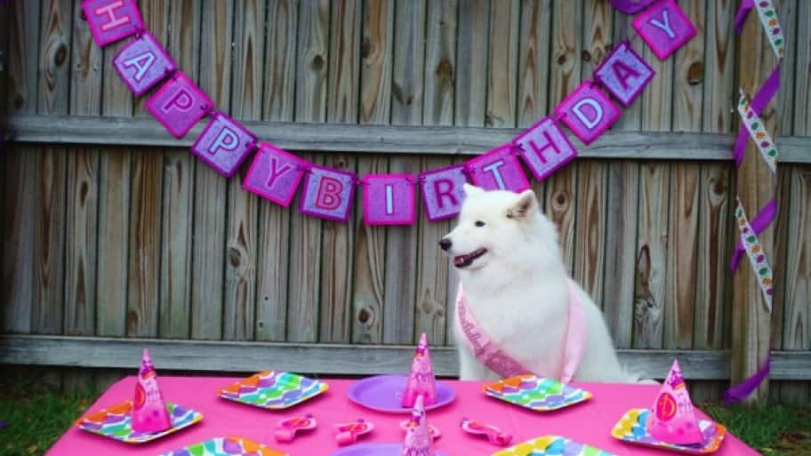 Pet Party Planners Say Its Important To Only Do Things Your Enjoys For Their Birthday Kallie Ice Loved Her Pink Photo Courtesy Of Canine