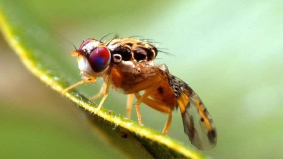 Tips for Combatting a Swarm of Pesky Fruit Flies | Angie's ...