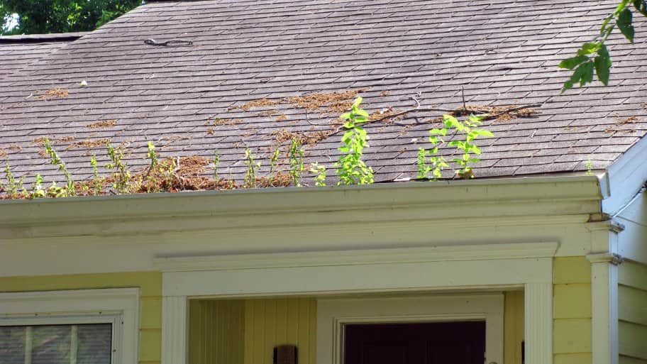 The guttering of a home sprouts plants from being left uncleaned for a period of time. (Photo by Photo courtesy of Natalie Maynor)