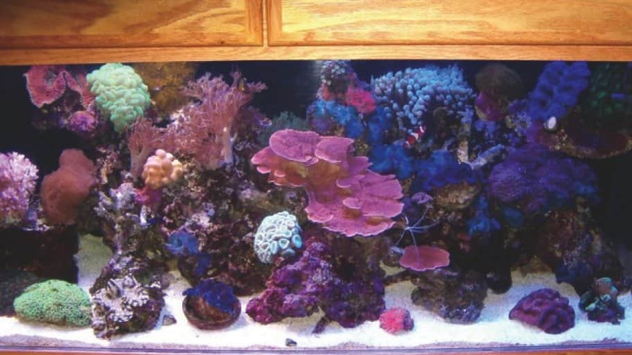 6 tips to owning an aquarium angie 39 s list for How to start a saltwater fish tank