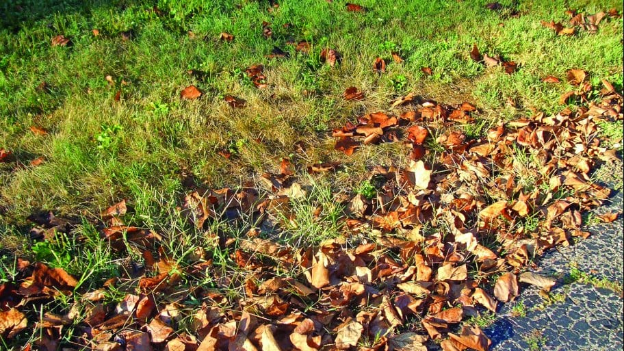 Fall leaves sit at the edge of a lawn. (Photo by Photo courtesy of JoEllen Meyers Sharp)