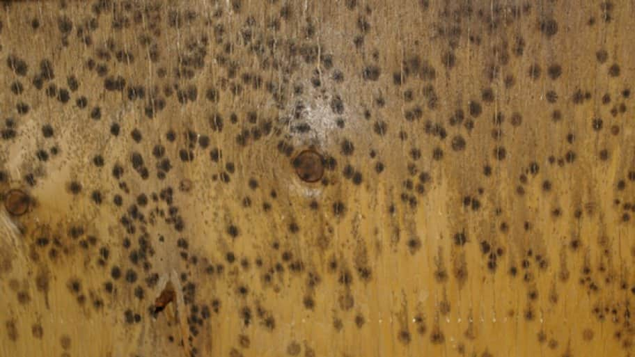 Even If A Prior Moisture Problem Has Been Fixed Once The Mold Grown Threat Remains Until Spores Are Physically Removed Says Flan
