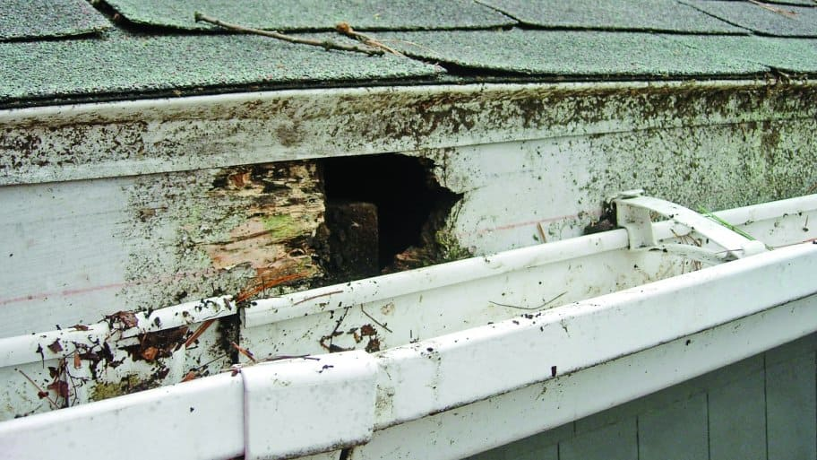 4 Fascia Board Repair Tips For Your Roof Angies List