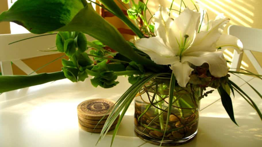 How to Keep Flowers Alive During Vacation   Angie\'s List