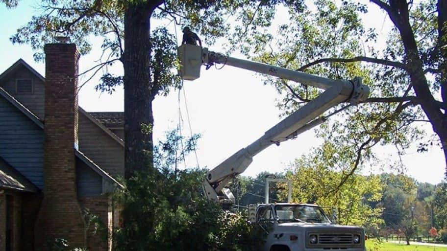 Ask service providers in advance what type of equipment they will use for tree trimming and inquire, too, about company protocol for cleaning up after a job. (Photo courtesy of Angie's List member Mark C. of Brandon, Miss.)