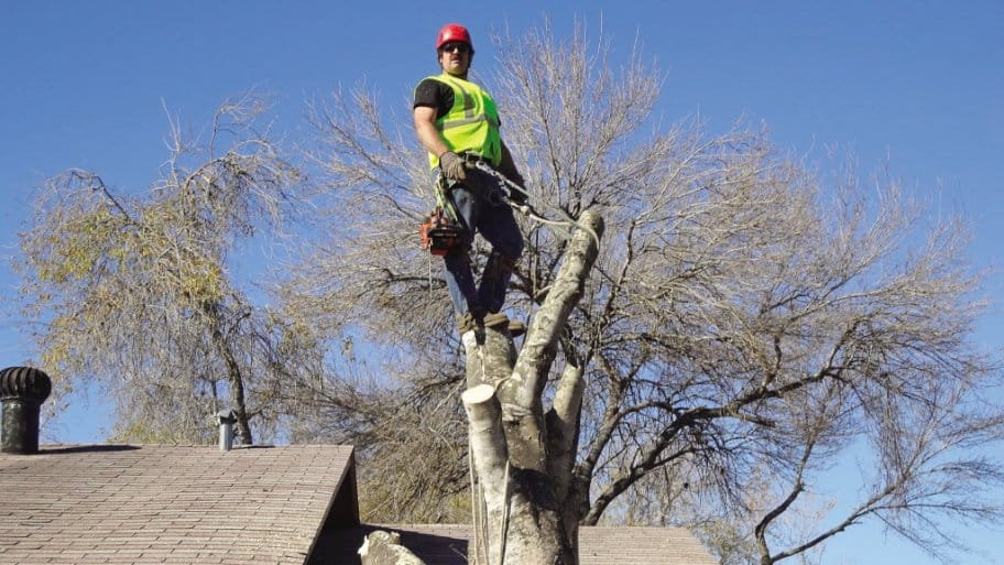 Tree Services Removal And Trimming Angie S List
