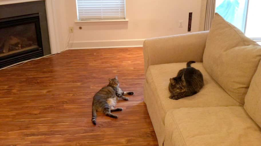 how to train a cat not to scratch the furniture angie s list rh angieslist com