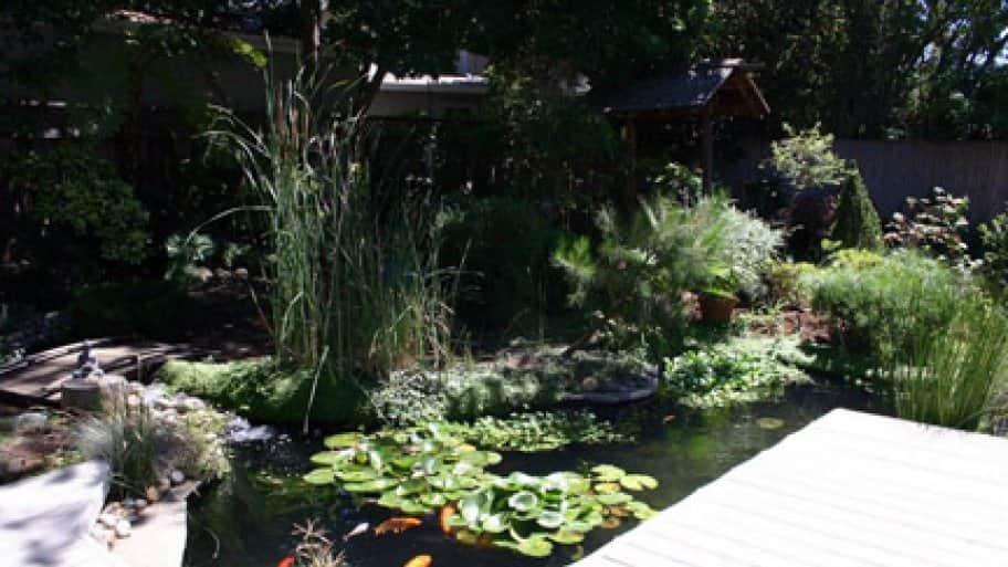 colorful backyard koi pond