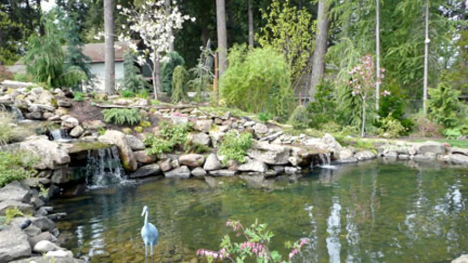 back water garden with rock waterfall